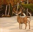 Winter Stag Madeleine Lewis